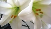 easterflowers 180x101 - easterflowers-180x101