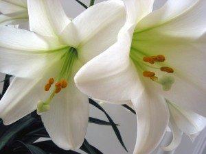 easterflowers 300x225 300x225 - easterflowers-300x225