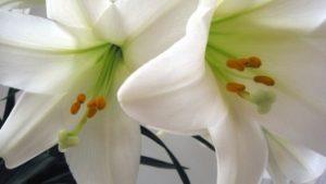 easterflowers 373x210 300x169 - easterflowers-373x210