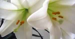 easterflowers 600x315 300x158 - easterflowers-600x315