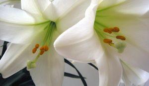 easterflowers 760x437 300x173 - easterflowers-760x437