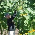 anne 1 150x150 - News from the Sisters of St. Francis of the  Neumann Communities