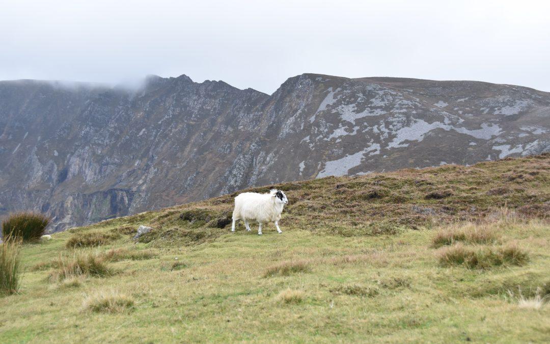Pilgrimage to Ireland, Day 6: Irish hospitality and Slieve League