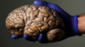 20180625T1122 0037 CNS POPE ACADEMY LIFE 120x67 - HUMAN BRAIN RESEARCH