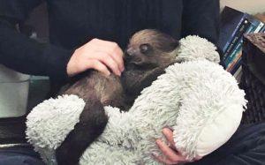 sloth 300x187 - sloth
