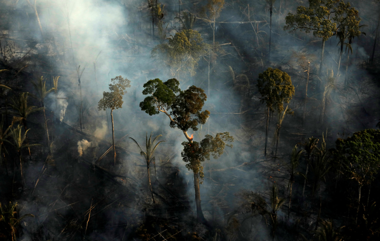 Solutions to save, protect forests needed 'without delay,' says cardinal
