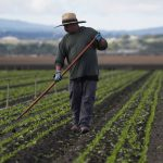 20200416T1112 425 CNS IN DEPTH FARMWORKERS COVID 150x150 - Experts, advocates alarmed by pandemic's possible effects on vulnerable