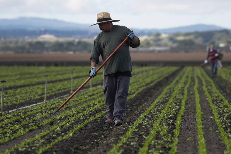 Advocates call attention to pandemic's wrath on 'essential' farmworkers
