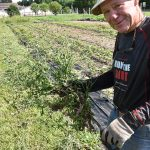 Charlie Reller with chicory weed 150x150 - Accelerated veggies: Brady Farm gets head start