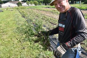 Charlie Reller with chicory weed 300x200 - Charlie Reller with chicory weed