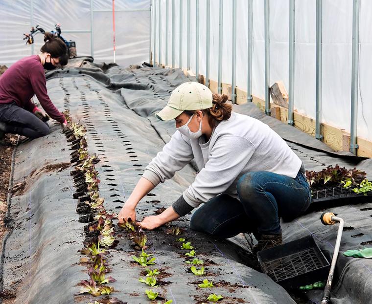 Accelerated veggies: Brady Farm gets head start