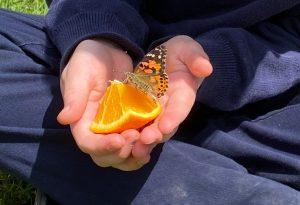 butterfly thumb 300x205 - butterfly thumb