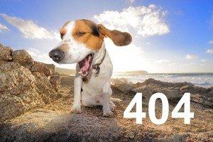 images 404 300x200 1 300x200 - images_404-300x200